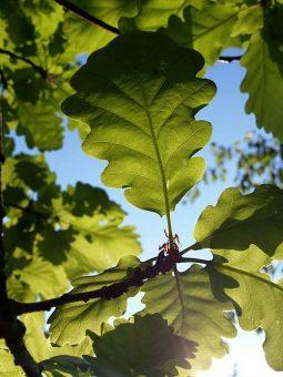 Susanne Hamann - grüne Blätter Symbolbild